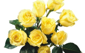 yellow-rose-bouquet_449354