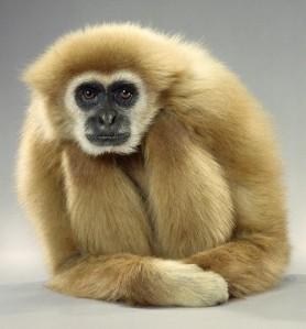 funny-monkey-portraits-by-jill-greenberg-chicquero-3