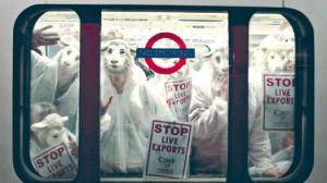 Londres. Protestas en el subterráneo contra el maltrato que reciben las ovejas en la cadena de comercialización.